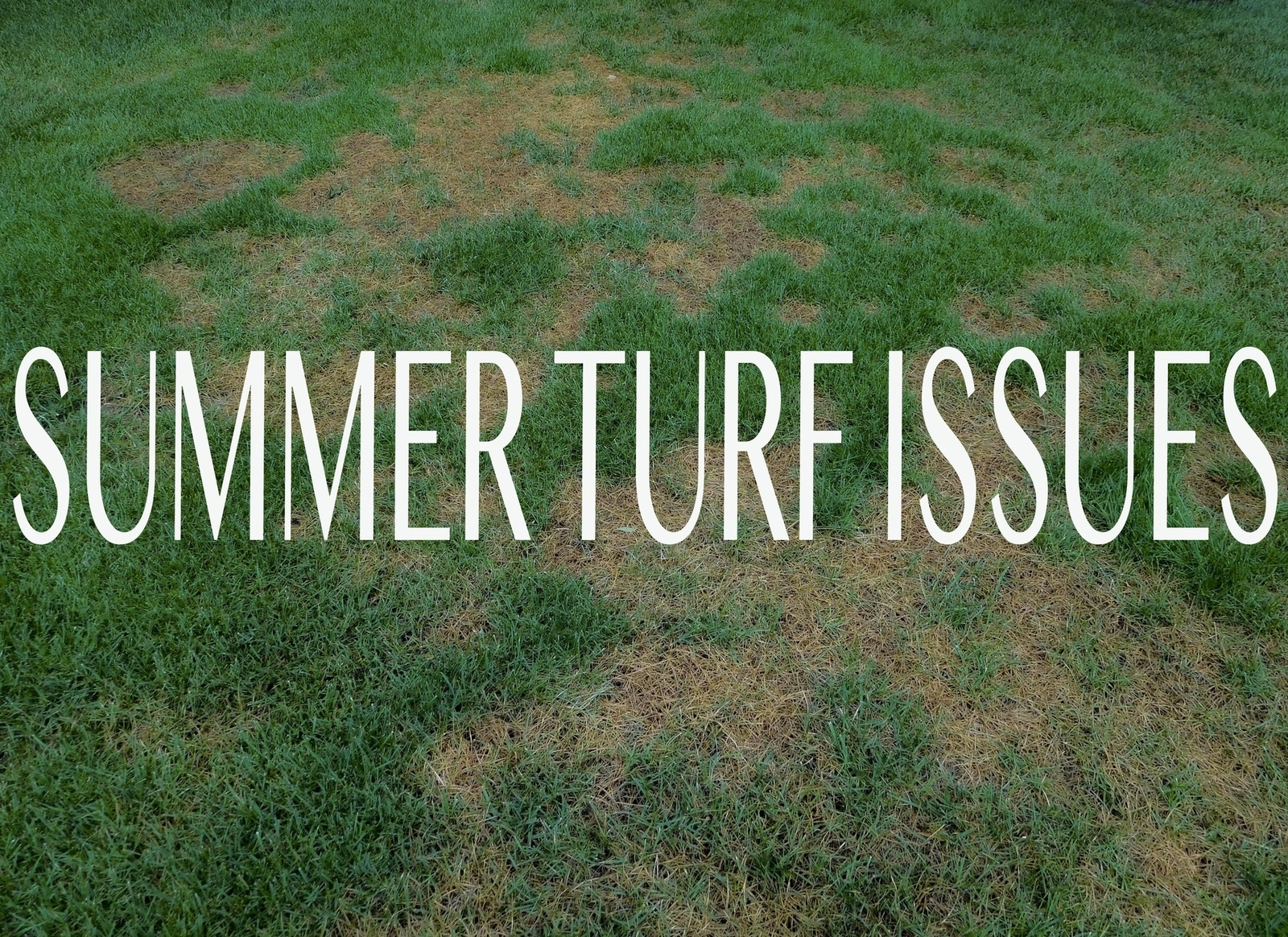 Weather Related Turf Issues